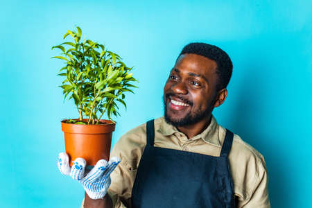 mixed race man in black apron taking care of flowers blue background Imagens