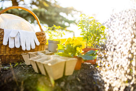Gardening tools outdoors start a sowing season seedtime watering a seeds sun light