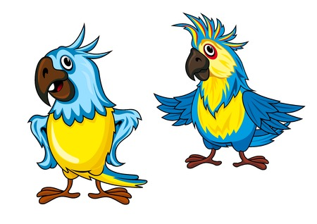 Cute colorful parrots cartoon characters showing birds with yellow and blue feathering and funny crests isolated on white background