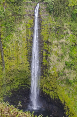 Akaka Falls on the Big Island of Hawaii  photo