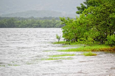salinity: Mangrove is a vegetation of some estuarine beaches, typical in tropical and subtropical climates