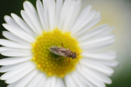 bug on flower photo