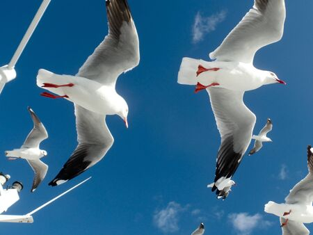 Gulls flying on top