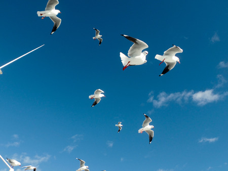 Gulls flying on the sky Imagens