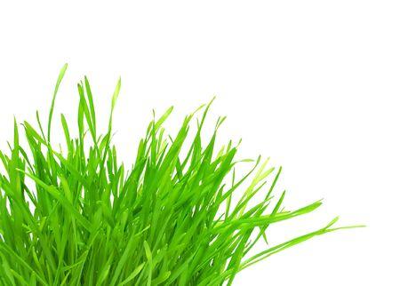 tuft: tuft of green grass isolated Stock Photo