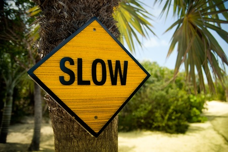 Yellow slow sign on the palm tree Stock Photo - 13777059