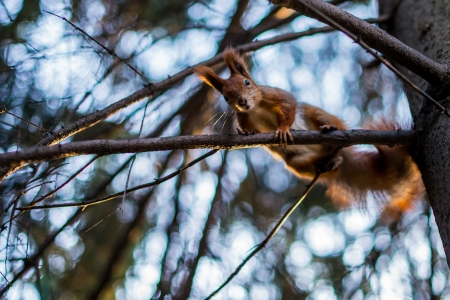 Squirrel sitting on tree branch Stock Photo - 16236776