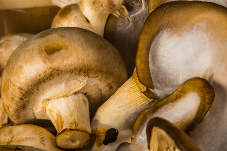 agaricus: Delicious raw Agraicus mushrooms on wooden background Stock Photo