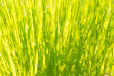 Abstract background green bokeh grass circles blurred