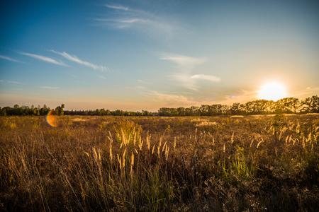 Landscape sunset over the field blue sky