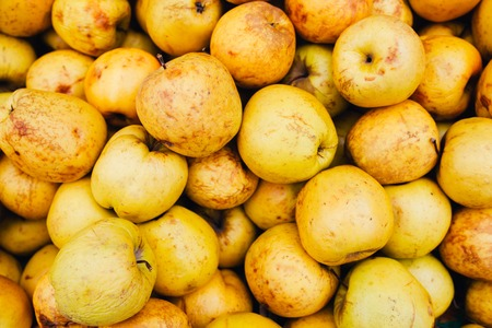 display of golden apples to the market