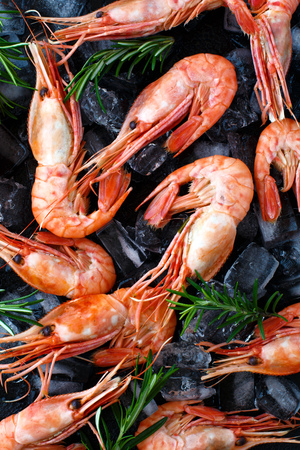 Tiger shrimps with rosemary on stone background.