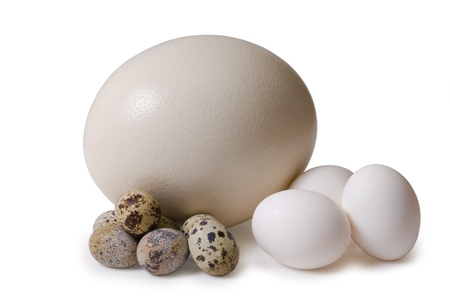 comparisons: Egg of the ostrich, hens, femail quails Stock Photo