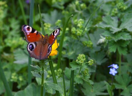 The beautiful butterfly on a green meadow