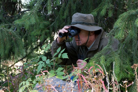 The hunter has hidden among fur-trees and observes in the field-glass