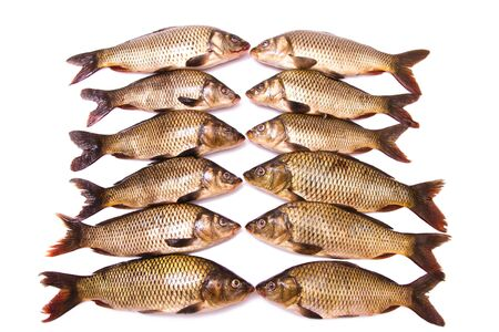 Twelve fresh carps on a white background photo