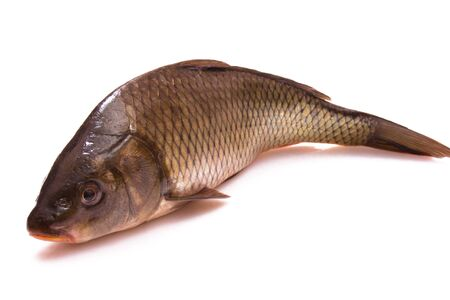Fish a carp on a white background