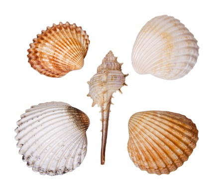 Composition five sea shells on a white background