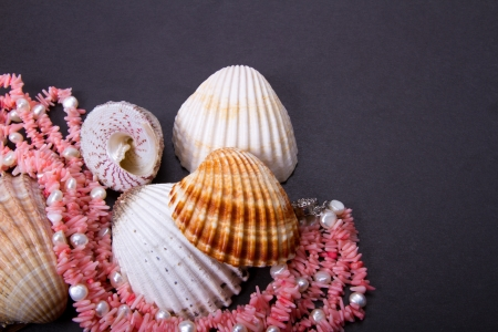 Composition from a coral beads and seashell Stock Photo