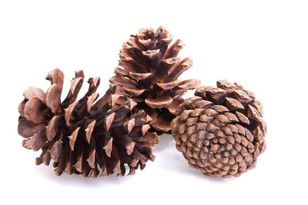 Three fir cones on a white background