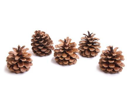 five fir cones on a white background Stock Photo