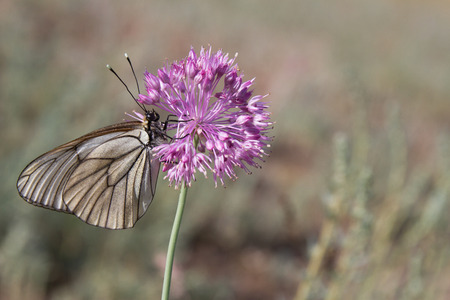 Butterfly on a purple flower, close-up