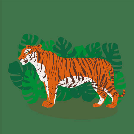 Trendy standing tiger in tropical leaves of monstera. Flat style
