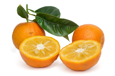 bitter fruit: Bitter Orange with leafes isolated on white
