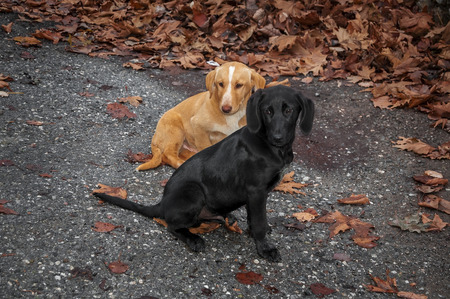 stray puppies and red autumn leaves