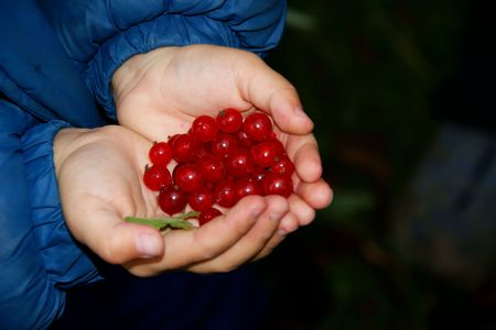 child  with hand in the manner of heart by pervaded berry of the red currant
