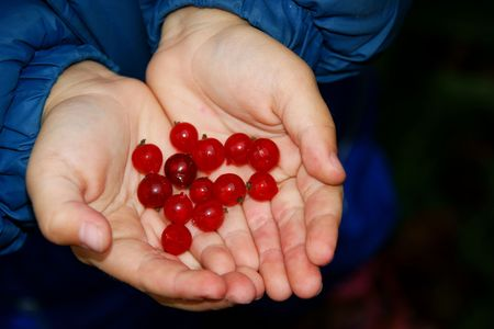 pervaded: child  with hand in the manner of heart by pervaded berry of the red currant