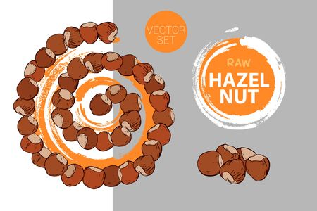 Spiral of hazelnuts with orange brush stroke circle on background. Cartoon nuts helix. Isolated hand drawn nuts. Raw hazelnut colorful vector label ready for web and print.