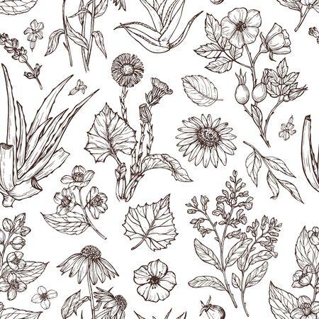 medicinal plants pattern illustration Ilustración de vector