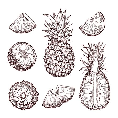 Hand drawn realistic pineapples, whole and sliced. Design elements. Hand drawn retro illustration collection set.  Can be used for cards, invitations, scrapbooking, print, manufacturing.