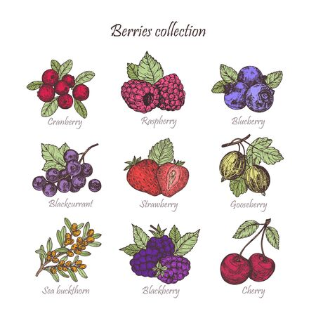 Hand drawn illustration berries set. Vector scetch.Vintage illustration. Botanical illustration of engraved berry. Colorful vector illustration.l