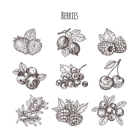 Hand drawn illustration berries set. Vector scetch.Vintage illustration. Botanical illustration of engraved berry.