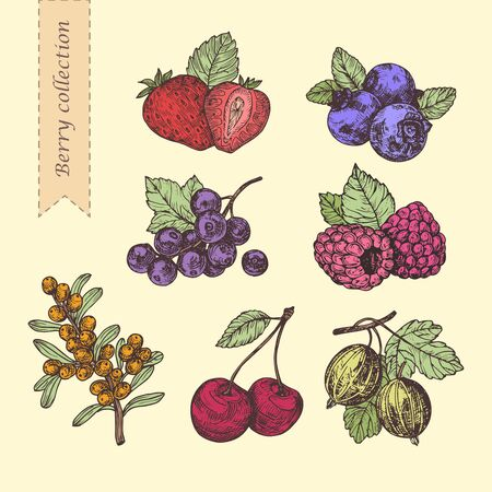 Hand drawn illustration berries set. Vector scetch.Vintage illustration. Botanical illustration of engraved berry. Vektorgrafik