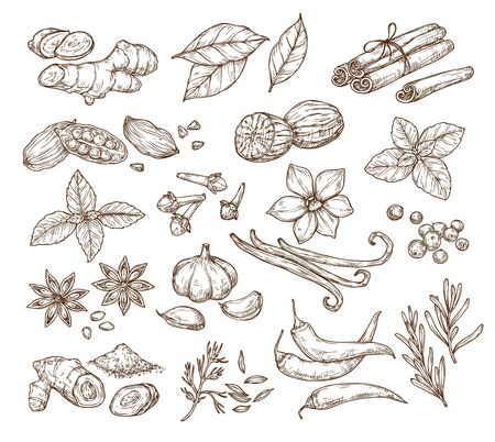 herbs and spices sketch