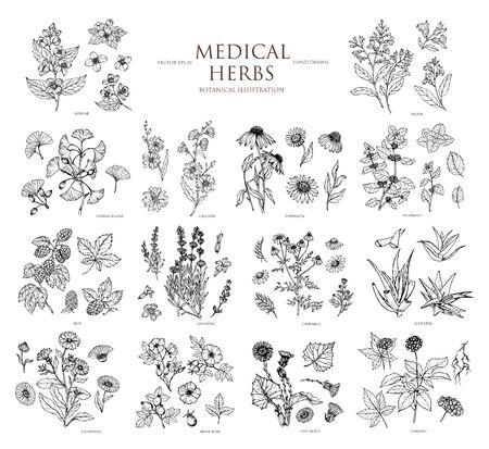 Vektor handgezeichnete Sammlung von medizinischen Kräutern. Botanisches Set.Vintage Design mit Kräuterblumen Illustration. Verwendung für Verpackungen, Postkarten, Textilien.