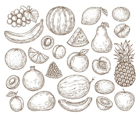 Vector set of fruits in retro style. Sketchy isolated fruits. Farming, harvest, organic products. Banana, orange, apple, pear, lemon, pineapple. For menus, backgrounds, packaging, advertising, textiles.
