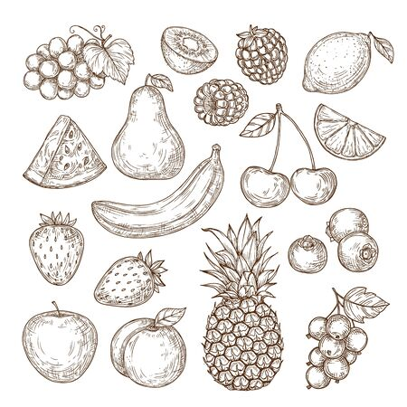 Vector set of fruits and berries in retro style. Sketchy isolated fruits and berries. Farming, harvest, organic products. Banana, apple, pear, lemon, strawberry, cherry, raspberry. For menus, backgrouns, textiles.