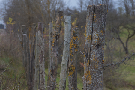 closeup high old wooden fence of logs in form of palisade vanish into space in countryland.