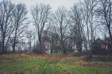 A path between the trees. Trees on a hill. Overcast. Fallen leaves.