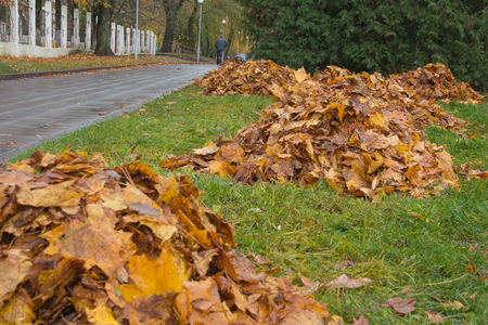 foliage cleaning - the cleaned foliage collected in a heap. autumn season