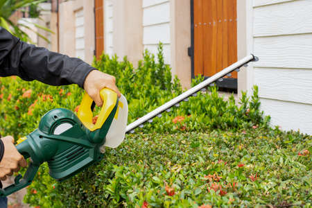 Man hand holding and using hedge trimmer for bush trimming. Shurb pruning, gardening and cutting concept. Home and garden concept. 写真素材