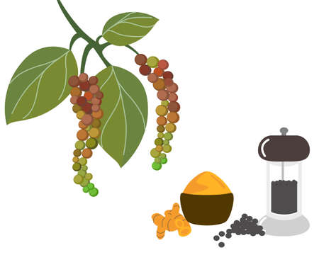 Pepper mill or pepper grinder with pile of black pepper and tumeric powder with tumeric root isolated on white. Icon vector illustration.