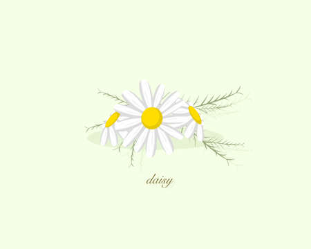 White daisy flower isolated on green background. Icon vector illustration.