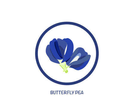 Butterfly pea flower isolated on white background. icon vector illustration. Vettoriali