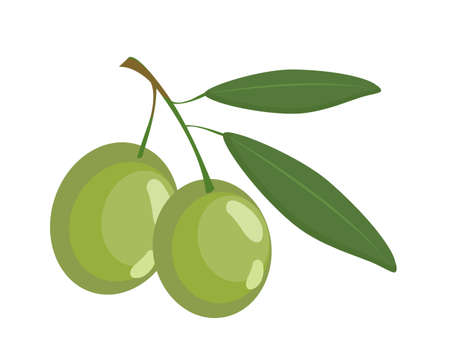 Branch of olive fruit with green leaf on white background. Icon vector illustration. 일러스트
