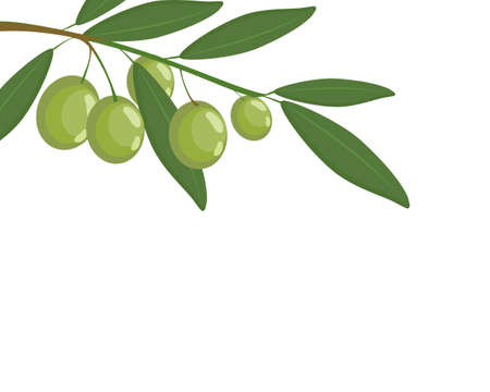 Twig of olives fruit with green leaf on white background. Icon vector illustration.
